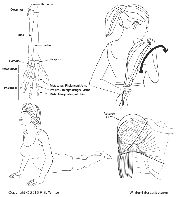 Women's exercise illustrations, created by Rob Winter